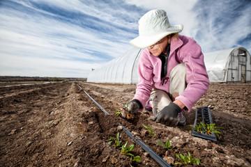 USA, Colorado, Mesa, Palisade, Woman kneeling and planting seedlings on organic farm