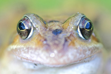 Detail of frog
