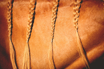 Close up of braided horse hair