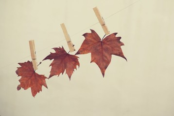 Three autumn leaves hanging with wooden pegs on rope