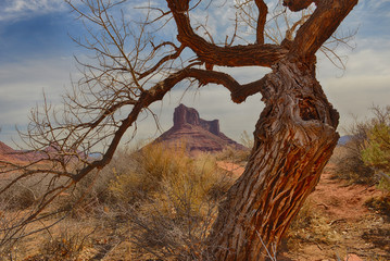 USA, Utah, Moab, Gnarly, Castle Mountain, Tree in Professor Valley