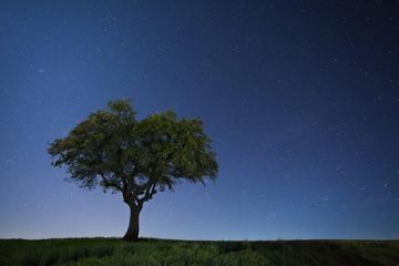 Green oak against starry sky
