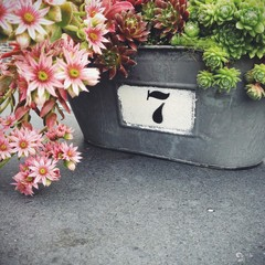 Close up of metal planter with colorful flowers