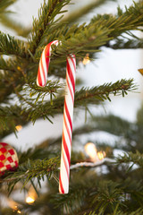Candy Cane hanging on Christmas tree