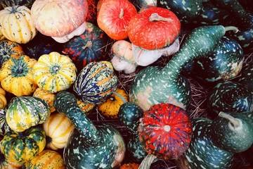 Pumpkins galore, studio shot