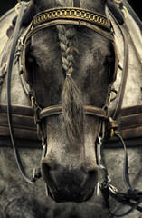 France, Paris, Portrait of horse