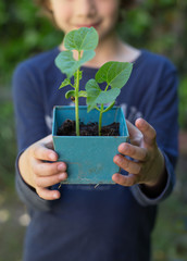 Girl (6-7) holding potted been sprouts