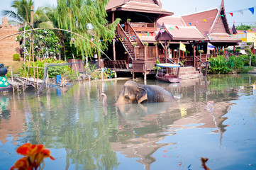 Thailand, Elephant bathing in river near house