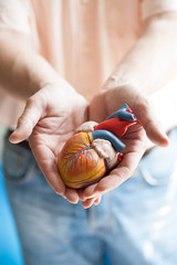 Close-up of human heart model in woman's hands