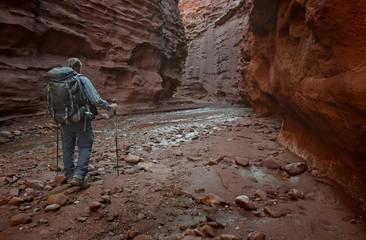 USA, Utah, Moab, Hiker in Professor Creek Narrows