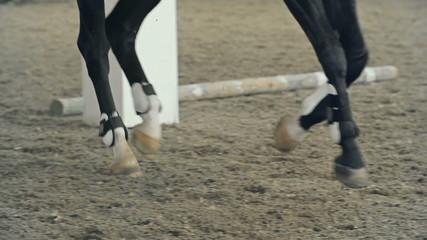 Horse Leg Wraps