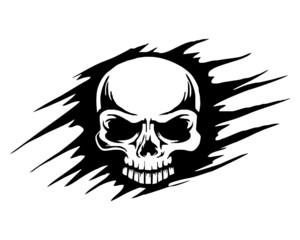 skull skeleton bone logo image vector
