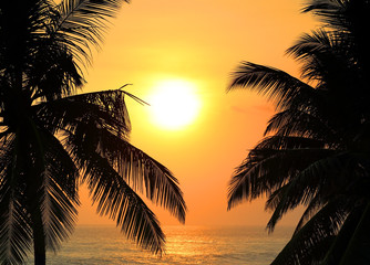 tropical sea sunset and palms