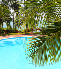 palm leaf and swimming pool