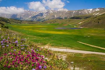 Fioritura nel parco del Gran Sasso e dei monti della Laga