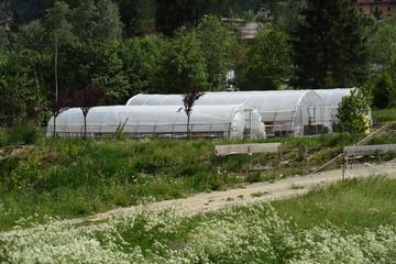 serre serra orto coltivazione