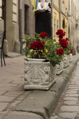 Flowerbeds in the city