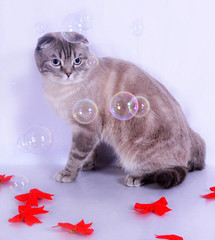 Cat With Bows & Bubbles
