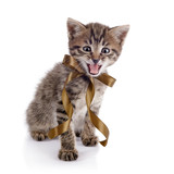 The striped mewing kitten with a bow. poster
