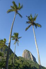 Sugarloaf Mountain Rio Brazil Palm Trees