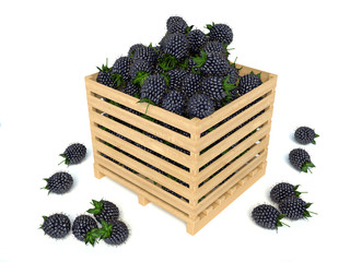 Blackberries in a wooden box on a white background