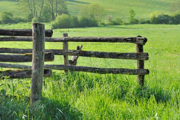 barrière en bois dans prairie à l'herbe verte
