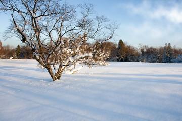 Winter Morning so white