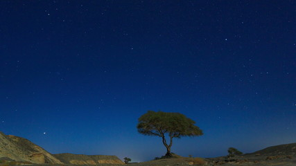 Starry sky in the desert