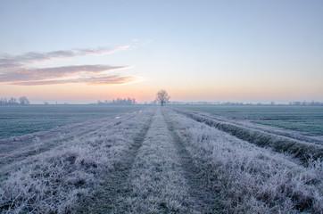 Alba in campagna in inverno