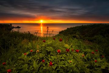 Sunrise with wild peonies on the beach near Kavarna, Bulgaria