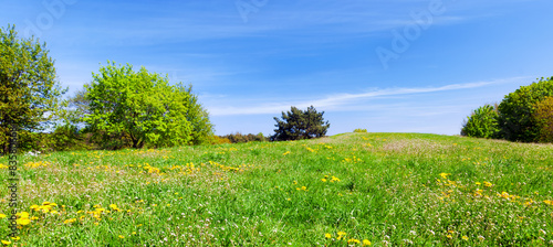 Panorama of summer meadow with green grass, trees and blue sky.