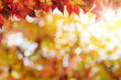 Abstract defocused autumn background with copy space