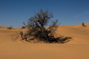 Some bushes in the desert