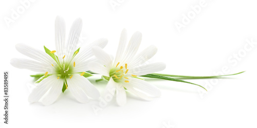 White flowers - 83589495
