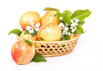 ripe apples and flower in basket isolated on white background