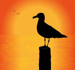 silhouette di gabbiano al tramonto