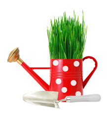 green grass in red polka dot watering can and shovel isolated on