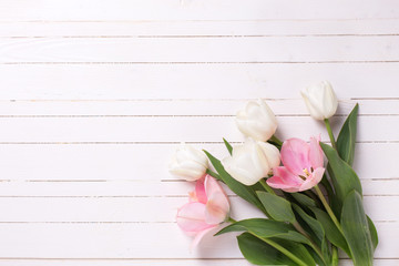 Background with fresh pink and white  tulip flowers