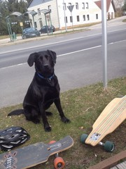 Longboard driving dog
