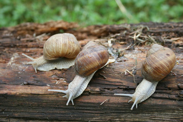 Group of snails