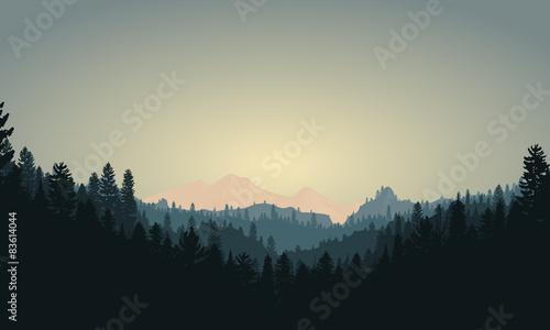 Forest Mountain Range Scene