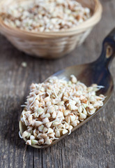 Green buckwheat sprouts in a scoop on a wooden table