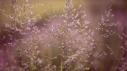 Lovely vintage meadow in gentle wind