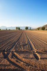 campo seminato a mais
