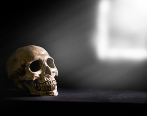 skull ,light from the window
