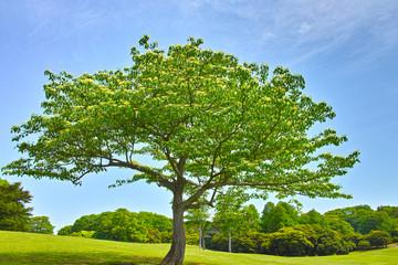 春の草原の大木