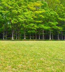 草原と林の境