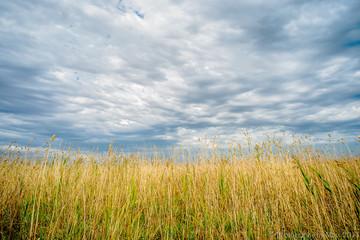 Fields facing a brewing storm