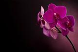 Fototapety Magenta blossom phalaenopsis at right side of dark
