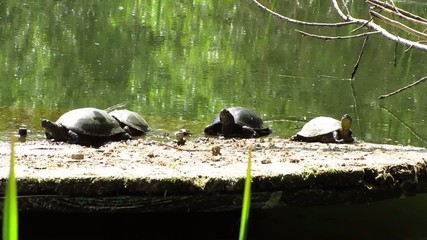 turtles sitting on a tree in water